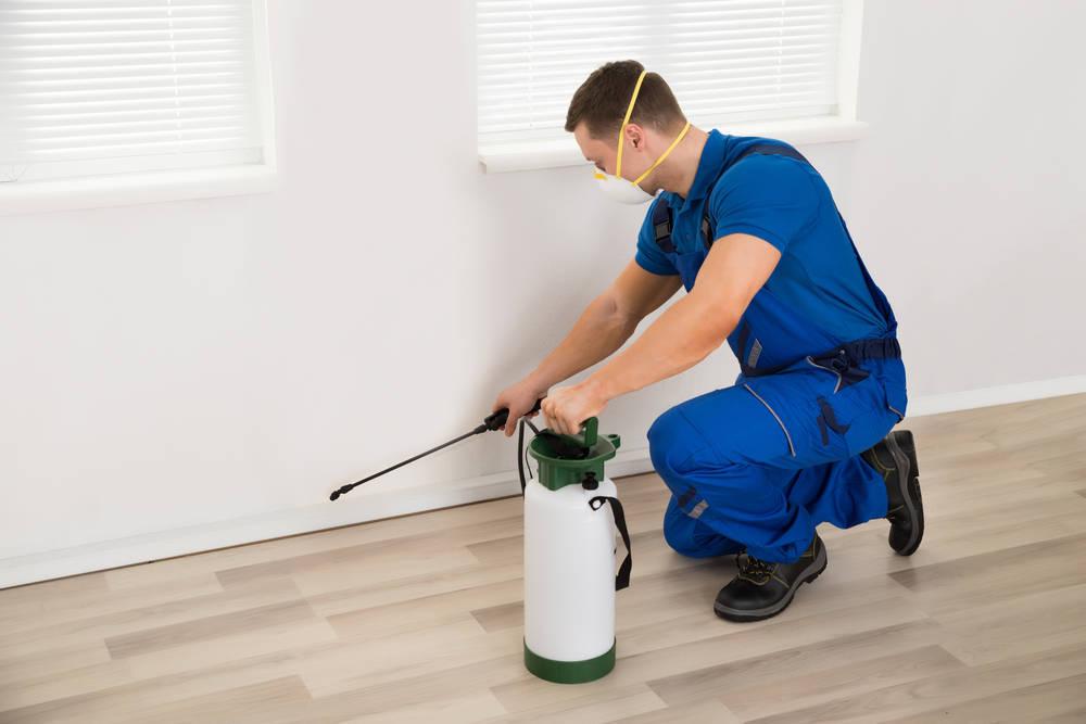 Las plagas más comunes en despachos y hogares