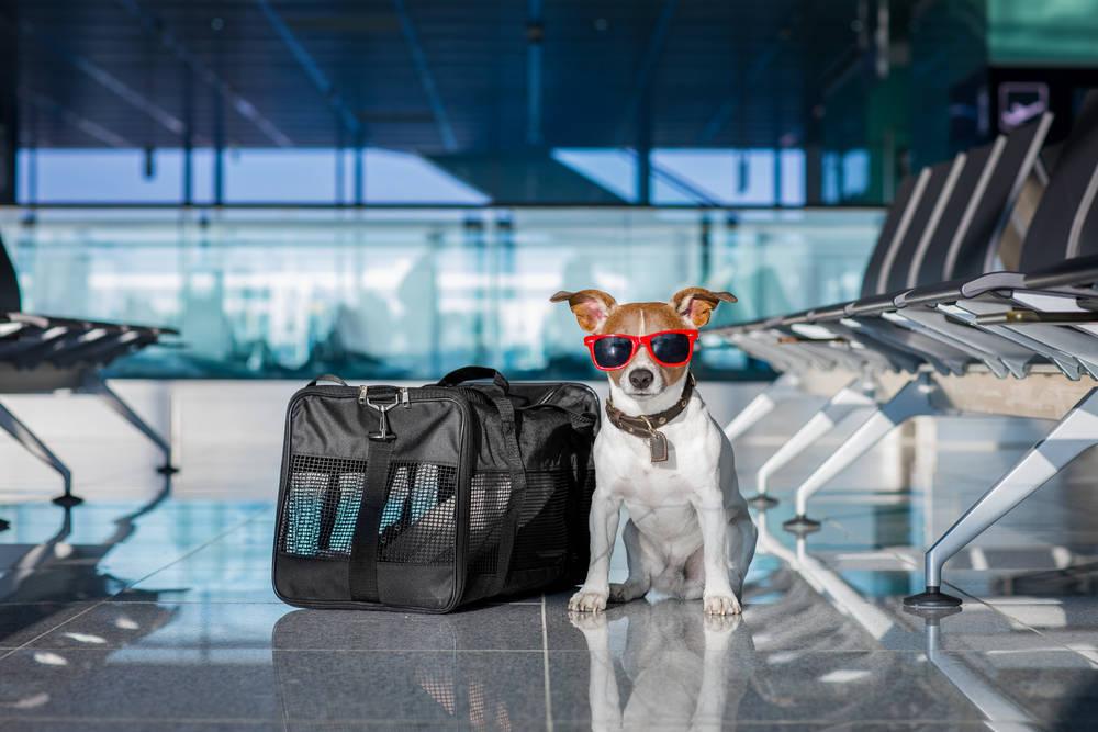 ¿Qué hago con mi mascota cuando viajo en avión?
